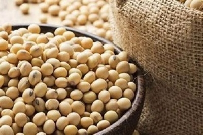 India's soybean exports to Iran could hike: Indian official